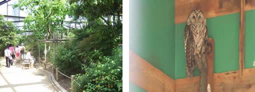 小鳥とリスの森