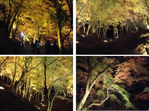 ライトアップされた香嵐渓