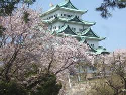 名古屋城をバックに咲く桜