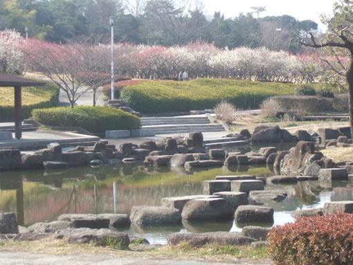 大高緑地公園の梅